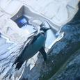 ペンギンロケット